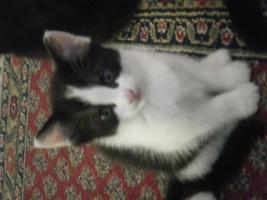 Foto 3 5 Katzenbabys aus Garbsen