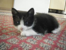 Foto 6 5 Katzenbabys aus Garbsen