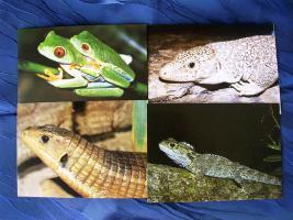 5  verschiedene  Postkarten mit  Reptilien  Foto`s