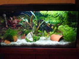60l komplettes Aquarium mit Besatz/Pflanzen/Technik etc