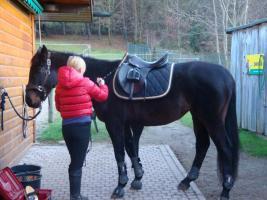 Foto 5 6.Jähriger Englischer Vollblut wallach Springtallent!, ALLROUNDER!!