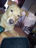 6. Monate alter Mischlings Welpe in gute Hände abzugeben