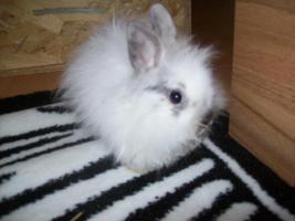 9 wochen alte kaninchen babys