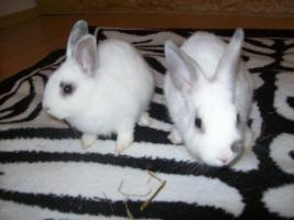 Foto 2 9 wochen alte kaninchen babys