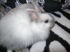 Foto 3 9 wochen alte kaninchen babys
