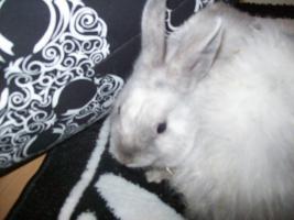 Foto 4 9 wochen alte kaninchen babys