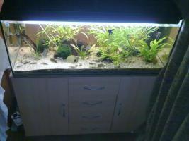 Foto 2 !!Achtung!! Aquarium 160l mit unterschrank , ,, Zucht Inventar uvm