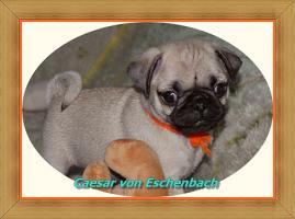 Das bin ich - Caesar von Eschenbach