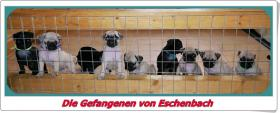 Die Gefangenen von Eschenbach - da soll ich dann alleine bleiben???