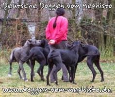 Foto 3 Achtung ! Die Mephistos erwarten am 25.April 2015 TOP-Welpen !