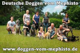 Foto 9 Achtung ! Die Mephistos erwarten am 25.April 2015 TOP-Welpen !