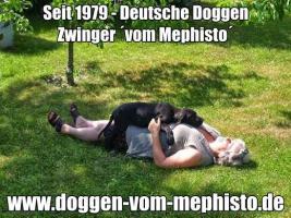 Foto 20 Achtung ! Die Mephistos erwarten am 25.April 2015 TOP-Welpen !