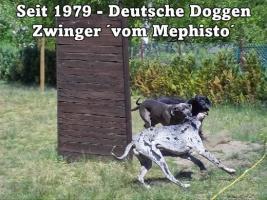 Foto 26 Achtung ! Die Mephistos erwarten am 25.April 2015 TOP-Welpen !