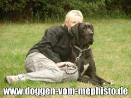 Foto 36 Achtung ! Die Mephistos erwarten am 25.April 2015 TOP-Welpen !