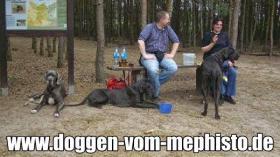 Foto 37 Achtung ! Die Mephistos erwarten am 25.April 2015 TOP-Welpen !