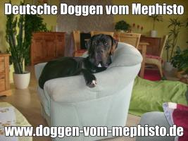 Foto 38 Achtung ! Die Mephistos erwarten am 25.April 2015 TOP-Welpen !