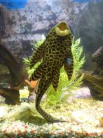 Foto 2 Achtung... komplett Aquarium... zum Schnäppchenpreis!!!