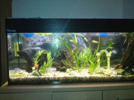 Foto 3 Achtung... komplett Aquarium... zum Schnäppchenpreis!!!