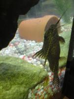 Foto 5 Achtung... komplett Aquarium... zum Schnäppchenpreis!!!