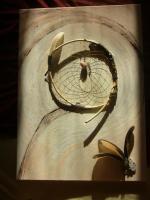 Foto 3 Acrylbild - Geschwungene Schönheit