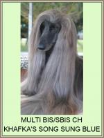 Foto 3 Afghanischer Windhund Welpen mit Papiere