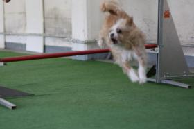 Agility (just for fun) in der Halle