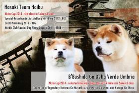Foto 2 Akita Inu Welpen zu verkaufen