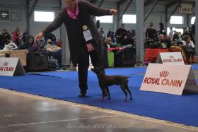 Foto 5 American Hairless Terrier