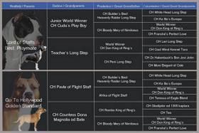 Foto 6 American Staffordshire Terrier Welpen zu verkaufen!