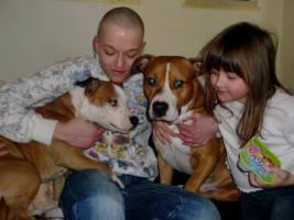 Foto 4 American Staffordshire Terrier , Amstaff Pitbull Deckrüde