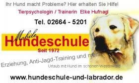 Anti-Jagd-Training, Gruppenkurse, Einzelunterricht. Hundeschule im WW, rlp