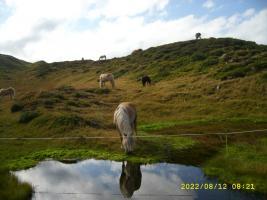 Foto 2 Apl-Sömmerung für Pferde