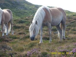 Foto 3 Apl-Sömmerung für Pferde