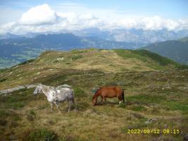 Foto 4 Apl-Sömmerung für Pferde