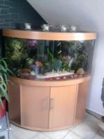Aqarium 350l von juwel mit ca.50 Fischen zu verkaufen