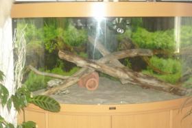 Foto 2 Aquarium