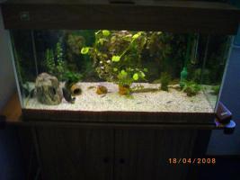Aquarium 100l mit Zubehör(Heizung, Fische u.Außenfilter)