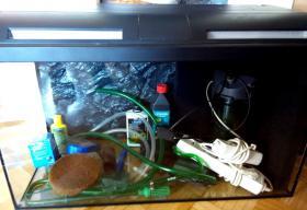 Foto 2 Aquarium 112 Liter und Abdeckung Filter viel Zubehör