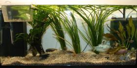 Aquarium 112L mit Komplett Zubehör
