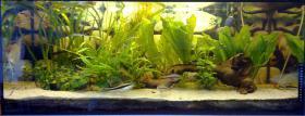 Aquarium 160 L komplett