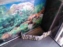 Foto 2 Aquarium 250l mit Zubehör zu verkaufen!!