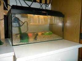 Aquarium für die Aufzucht von Fischbrut, komplette Ausrüstung
