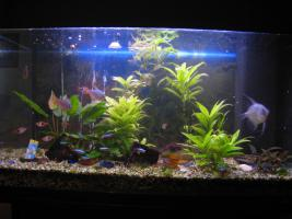 Foto 2 Aquarium mit Fische