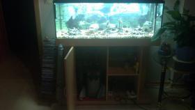 Foto 3 Aquarium mit Fischen und Zubehör