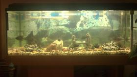 Foto 4 Aquarium mit Fischen und Zubehör
