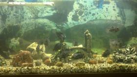 Foto 5 Aquarium mit Fischen und Zubehör
