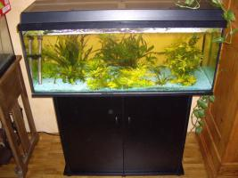 Aquarium von Juwel 160 Liter mit Abdeckung, Beleuchtung und Unterschrank