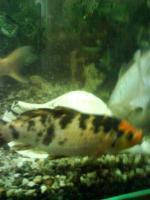Foto 2 Aquarium und Kois