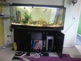 Aquarium Panuramer ca.440 Liter