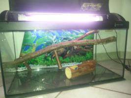 Foto 4 Aquarium/Terrarium aus Glas +Abdeckung+Beleuchtung +Zubehör